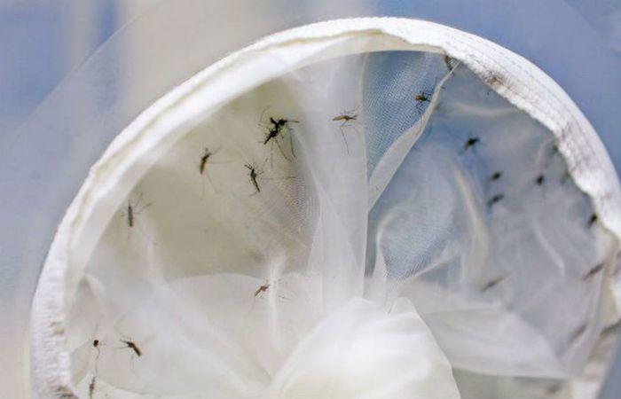 zika - usp desenvolve teste mais eficaz