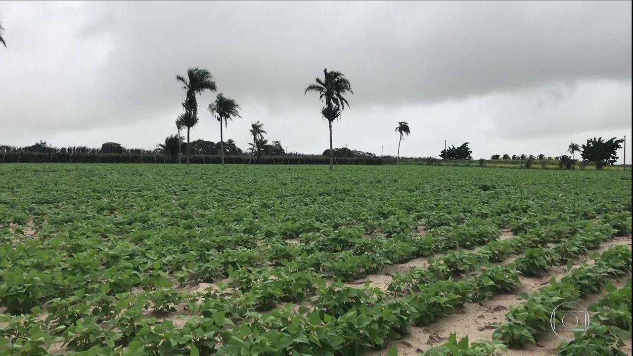 feijão-pernambucano-impulsiona-agronegócio-da-região